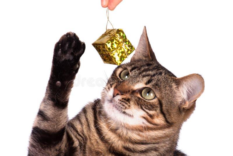 Tabby kot bawić się z zabawkami zdjęcie royalty free