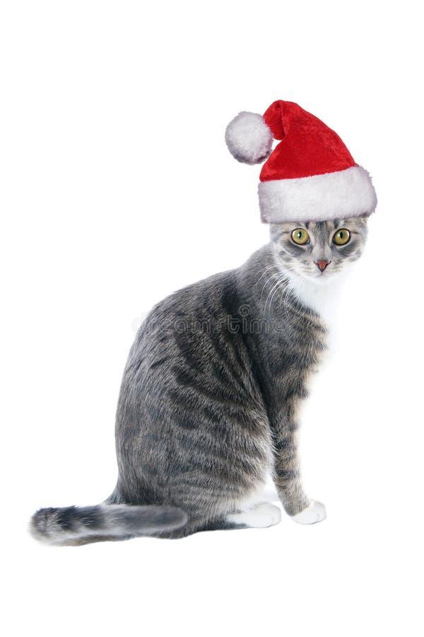 Tabby kot jest ubranym Santa kapelusz dla bożych narodzeń obrazy royalty free