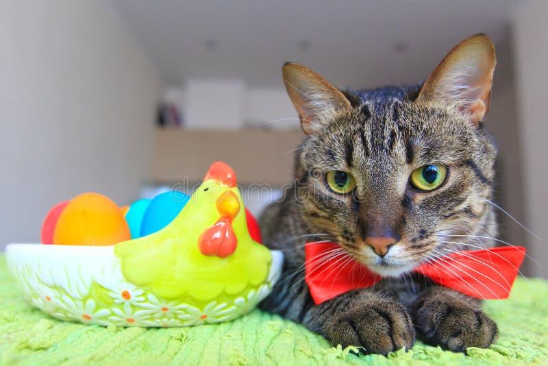 Tabby kot przy Easter zdjęcie stock