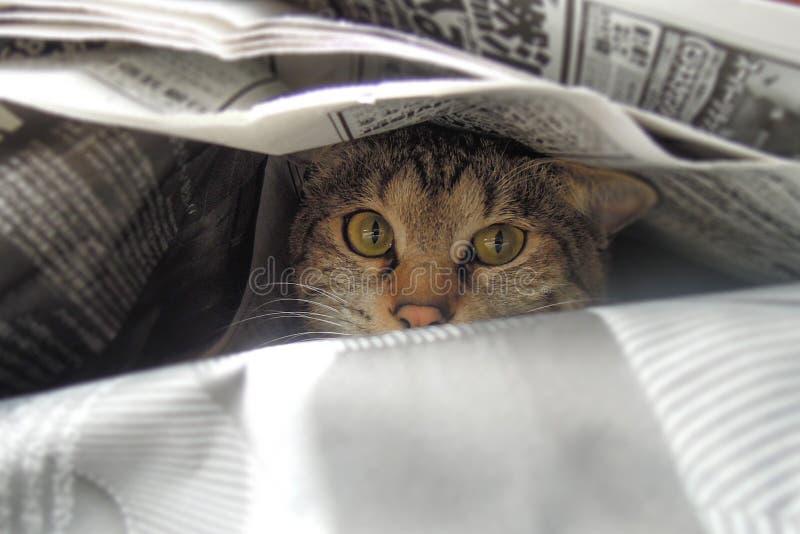 Tabby kot w śródmieściu w Tokio obraz stock