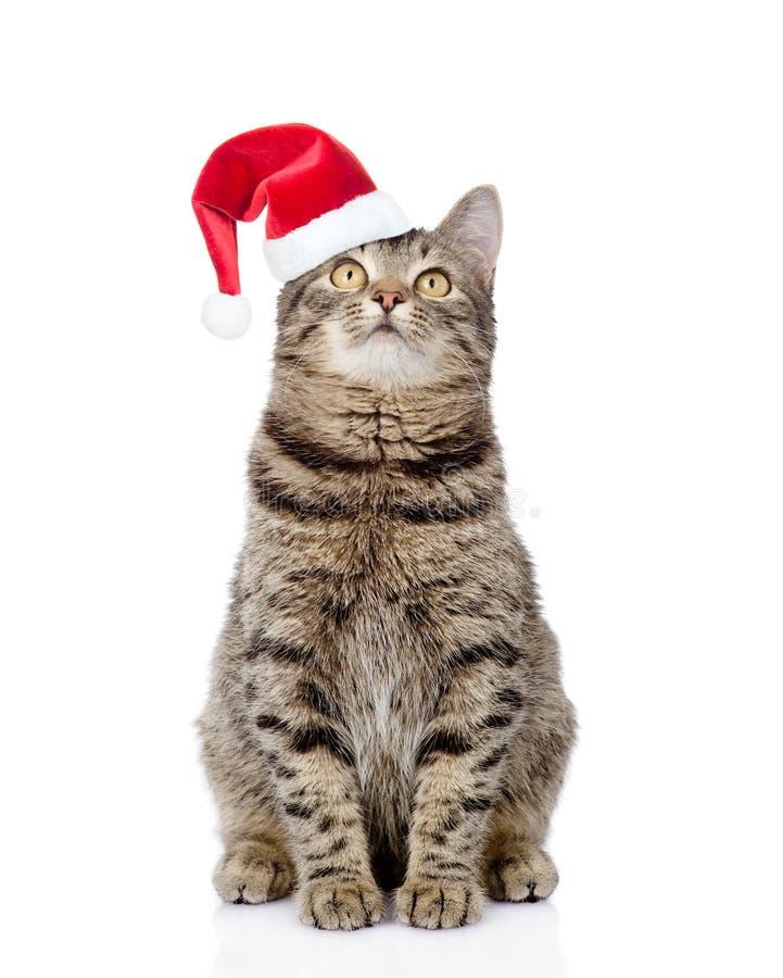 Tabby kot w czerwonych bożych narodzeń kapeluszowy przyglądający up Odizolowywający na bielu zdjęcia royalty free