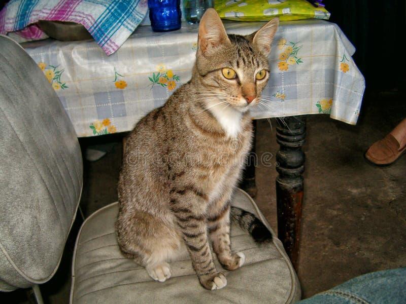 Tabby kot w domu obraz stock
