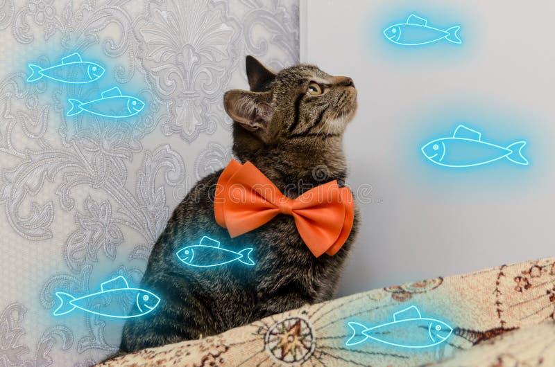 Tabby kot z łękiem przy jego szyi spojrzeniami przy neonowymi jarzeniowymi rybami błękitny koloru dopłynięcie wokoło on zdjęcie stock