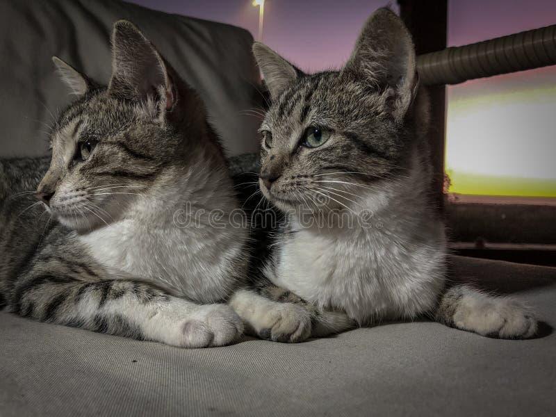 Tabby kota figlarki rodzeństwa próbuje spać zdjęcia royalty free