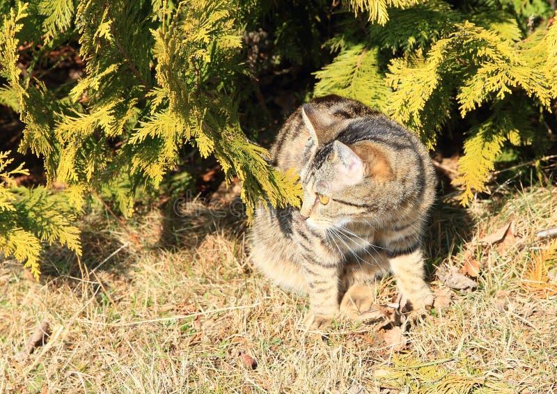 Tabby kota obsiadanie Pod drzewem fotografia stock