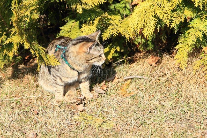 Tabby kota obsiadanie Pod drzewem zdjęcie royalty free