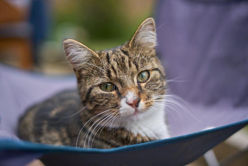 Tabby kota Okładzinowa kamera zdjęcia stock