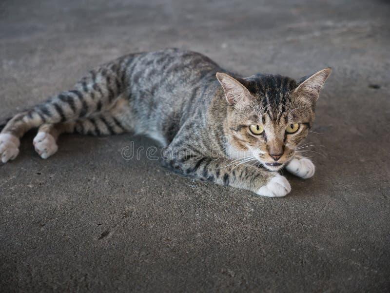 Tabby kota Przybłąkany lying on the beach w Cementowej podłoga zdjęcia stock