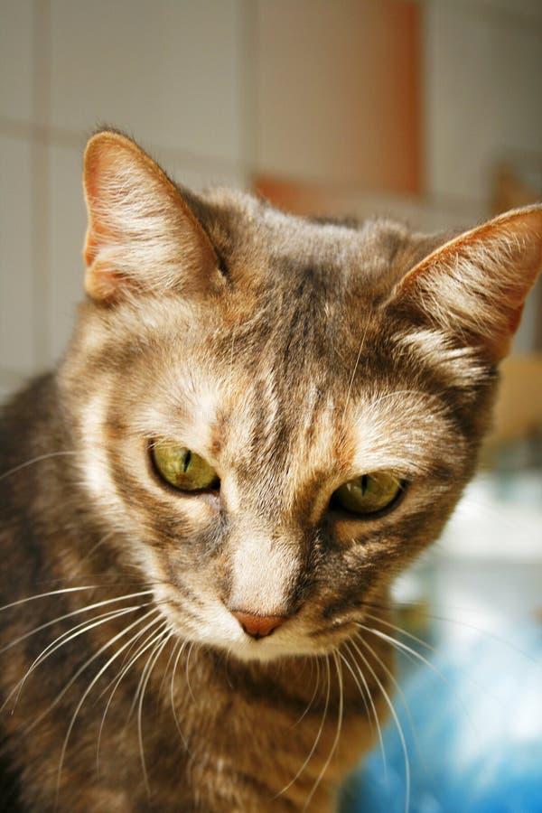 Tabby kota smutny spojrzenie zdjęcia royalty free