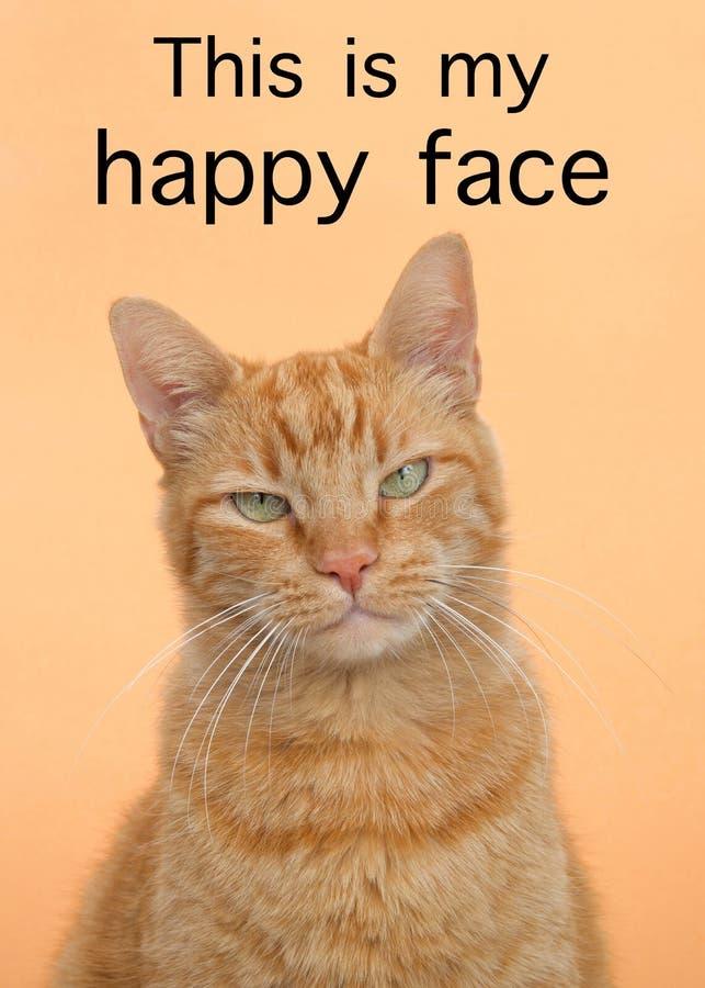 Tabby kota zakończenie up jest mój szczęśliwym twarzy tekstem z to zdjęcia royalty free