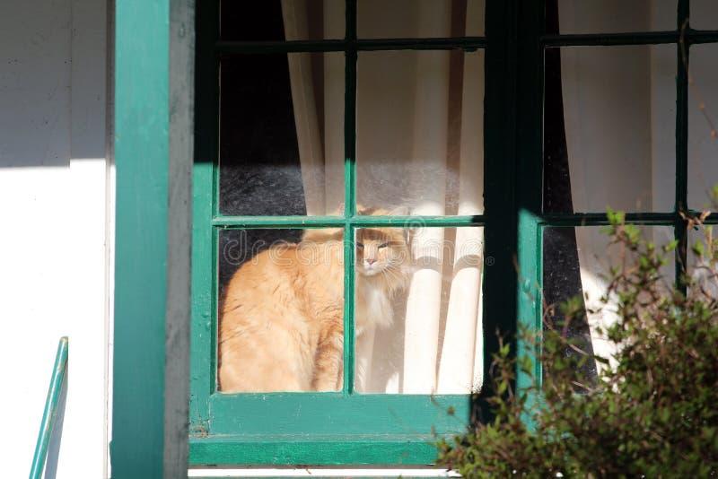 Tabby Orange Cat in een venster die uit staren stock foto
