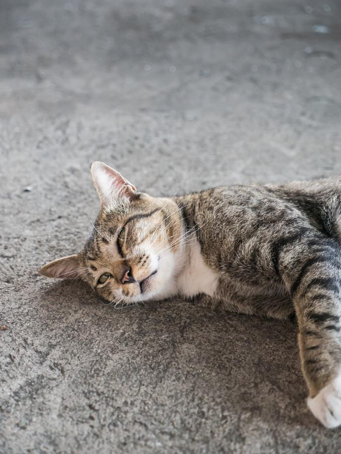 Tabby Stray Cat Lying fotografia stock