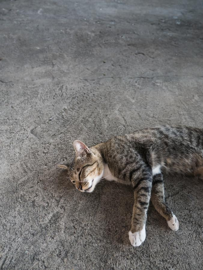 Tabby Stray Cat Sleeping fotografia stock libera da diritti