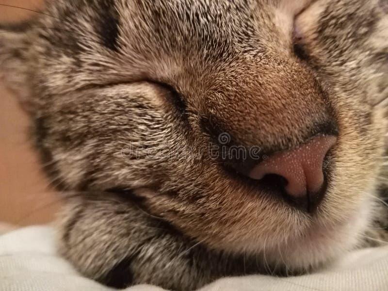 Tabby Takes Cat Nap lizenzfreie stockfotografie