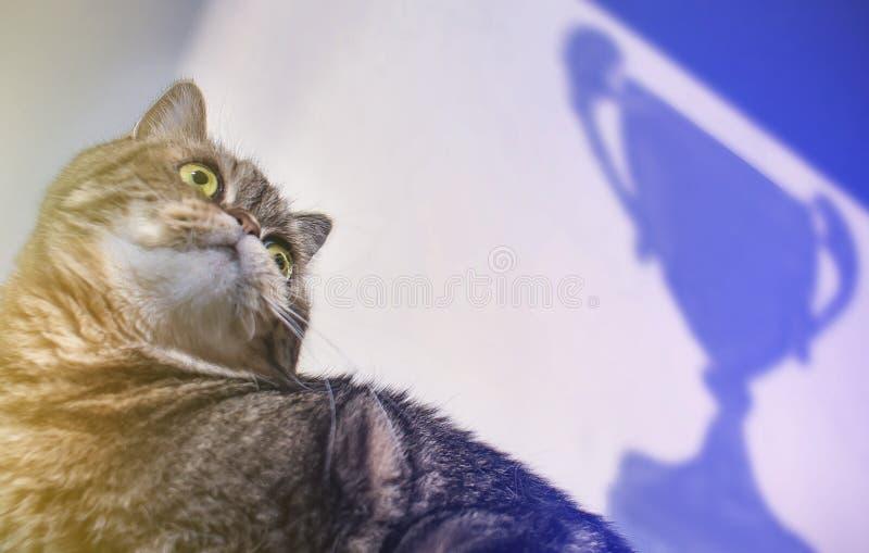 Tabby Win Success-concept kat op een achtergrond van een zegevierende kop stock afbeelding