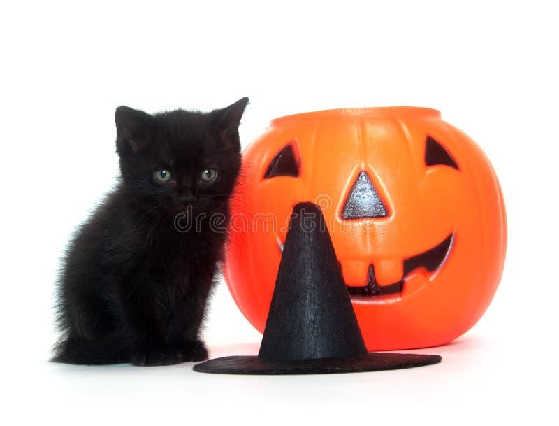 Tabbykätzchen mit Halloween-Dekorationen stockbilder