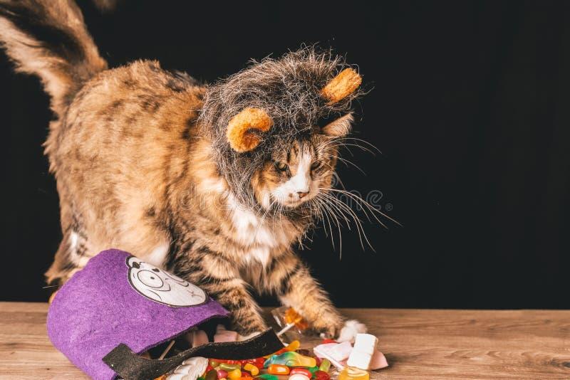 Tabbykatt med en cosplay furry björnhuvud ovanpå ett träbord som har godis royaltyfri illustrationer