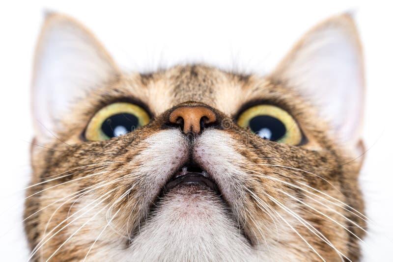 Tabbykatze, die oben schaut stockfoto