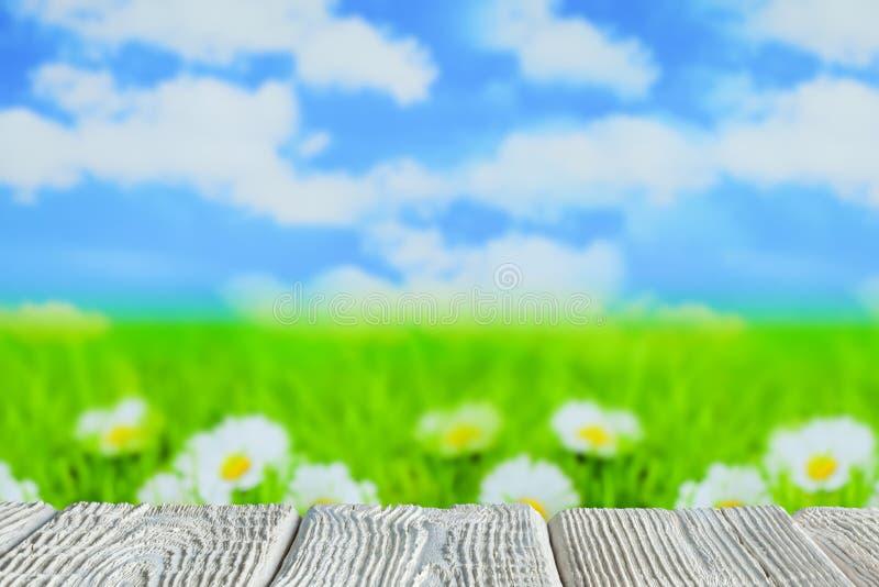 Tabela de madeira branca com espaço vazio no fundo da natureza - grama com margaridas e céu ilustração royalty free