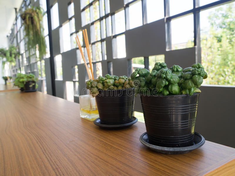 Tabela de madeira com a árvore verde da folha do jardim no vaso de flores imagens de stock