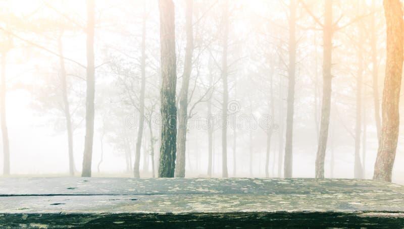 Tabela de madeira na árvore de floresta durante um dia nevoento fotos de stock royalty free