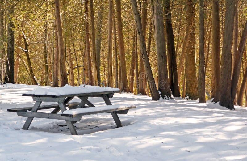 Tabela de piquenique do inverno com cedros sunlit foto de stock