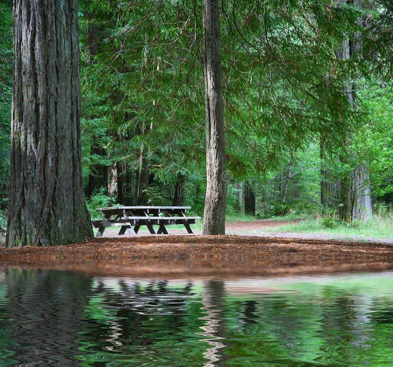 tabela sekwoją leśny na piknik fotografia royalty free