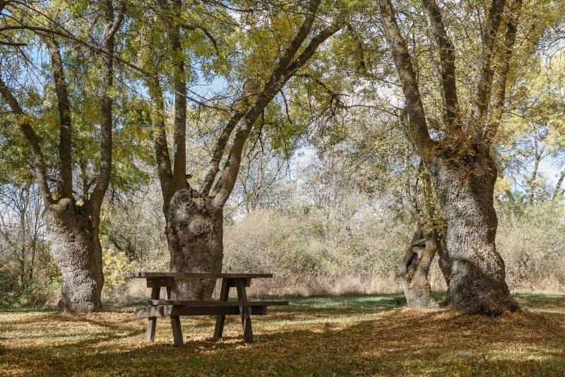 Tabell och stolar i fältet arkivbild