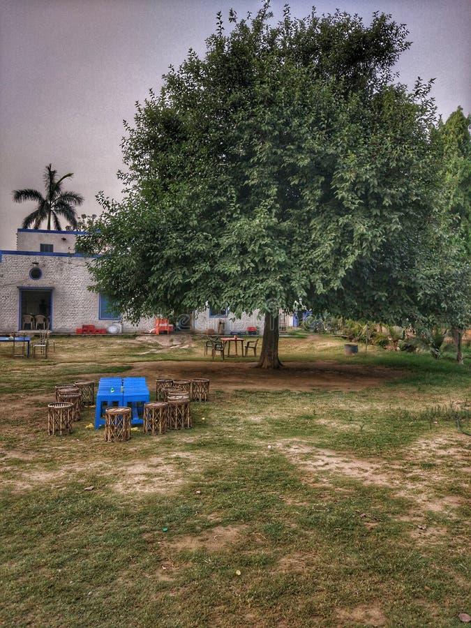 Tabell under ett träd royaltyfri foto