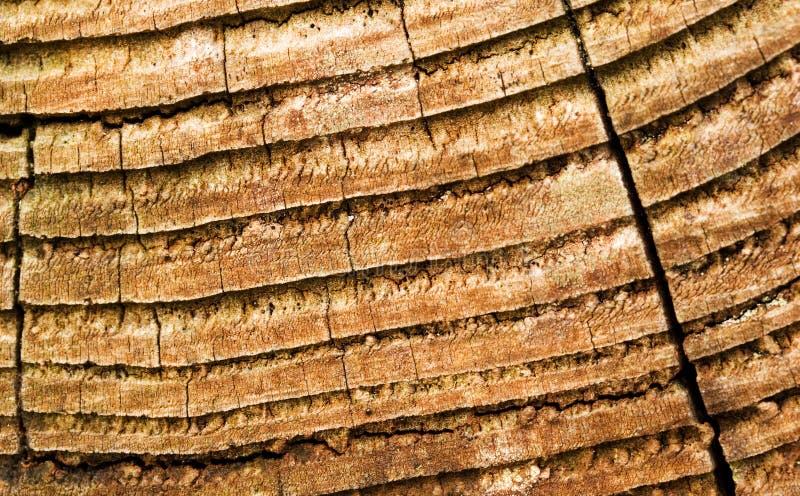 Tablón de madera imagen de archivo libre de regalías