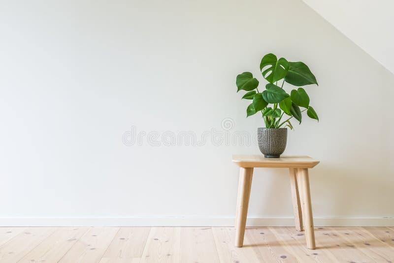 Tabla de madera con una planta en conserva, árbol Monstera de la ensalada de fruta imagenes de archivo