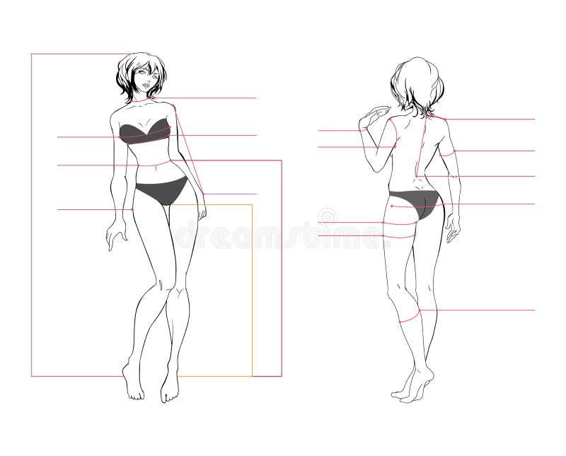 Tabla de medidas del cuerpo de la mujer ilustración del vector