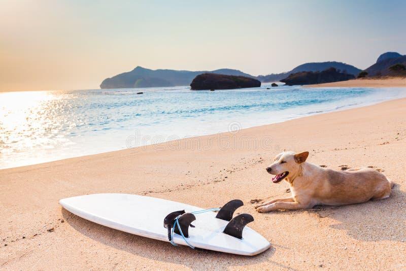 Tabla hawaiana en la playa salvaje fotografía de archivo libre de regalías