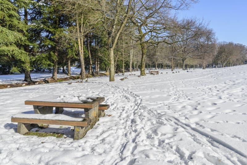 Tabla y un banco cubierto con nieve, rastros en la nieve, gansos, árboles verdes y un cielo azul foto de archivo libre de regalías