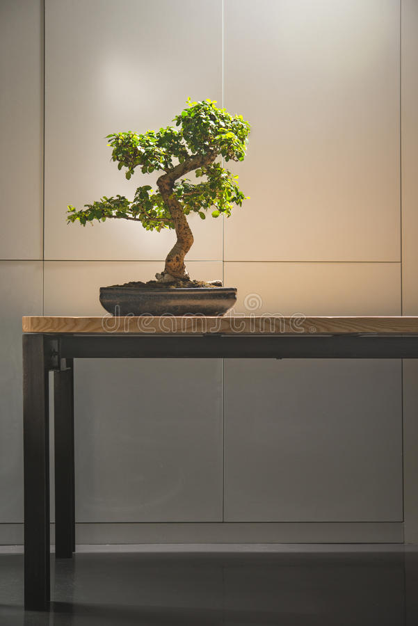On the table is a bonsai tree in a ceramic pot stock photography