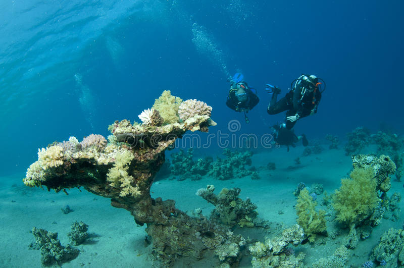 Table coral and scuba divers royalty free stock photos