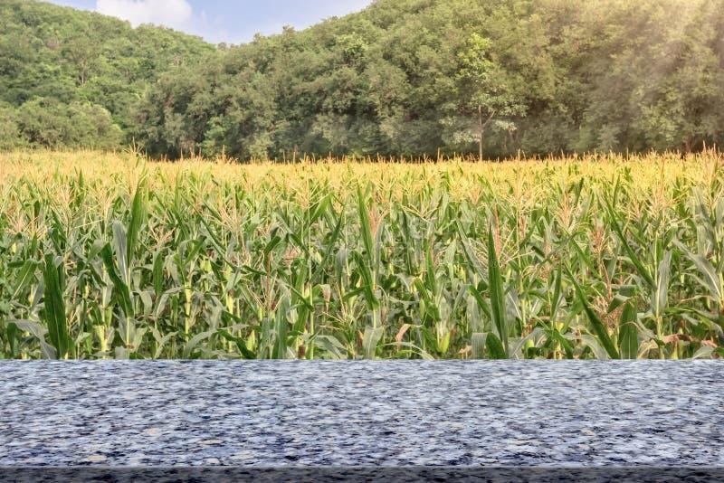 Table de marbre avec la ferme de maïs avec le ciel bleu photographie stock