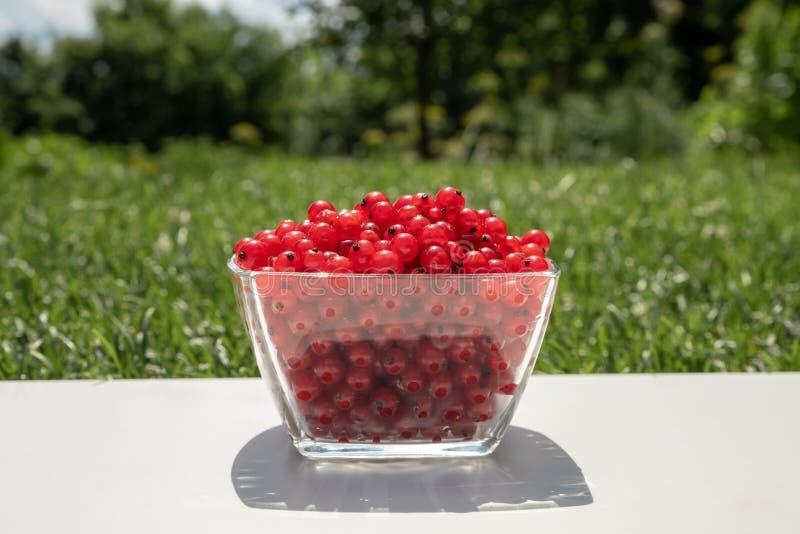 Table de récolte d'été avec les groseilles rouges en verres sur une table en bois blanche avec l'herbe sur le fond images libres de droits
