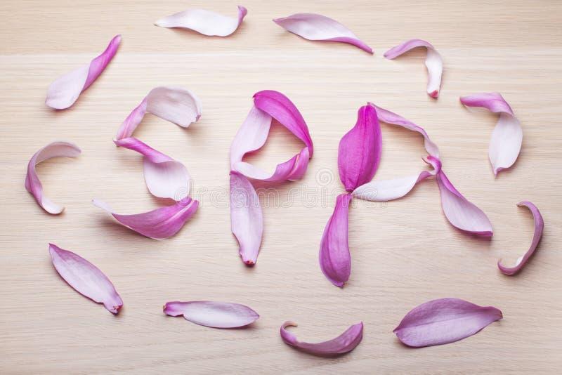 Table en bois de p?tale rose de magnolia personne images libres de droits