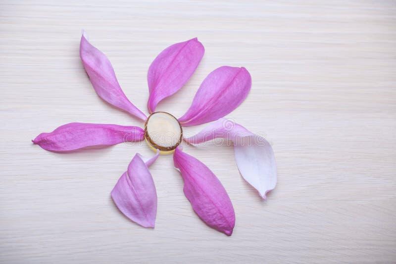 Table en bois de p?tale rose de magnolia personne photo stock