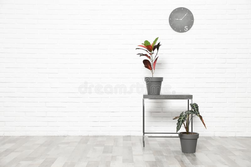 Table and indoor plants at white brick wall. Trendy home interior decor. Table and indoor plants at white brick wall, space for text. Trendy home interior decor stock photos