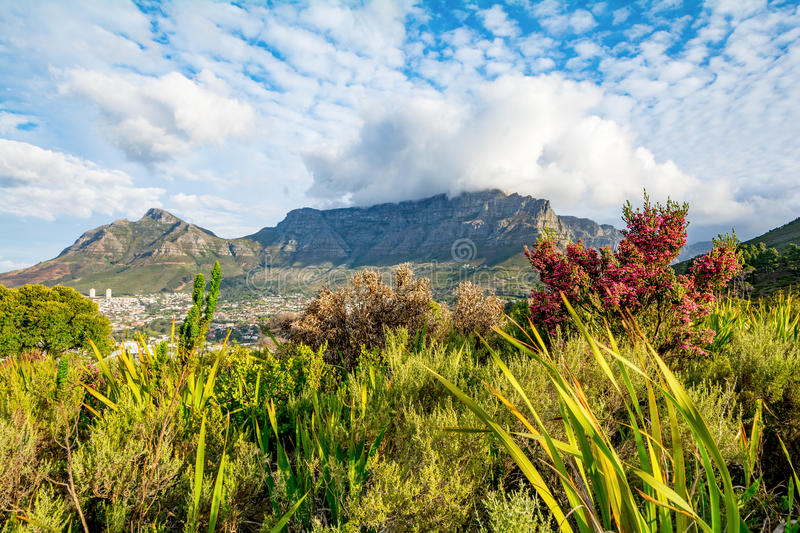 Table Mountain in Cape Town South Africa royalty free stock photo