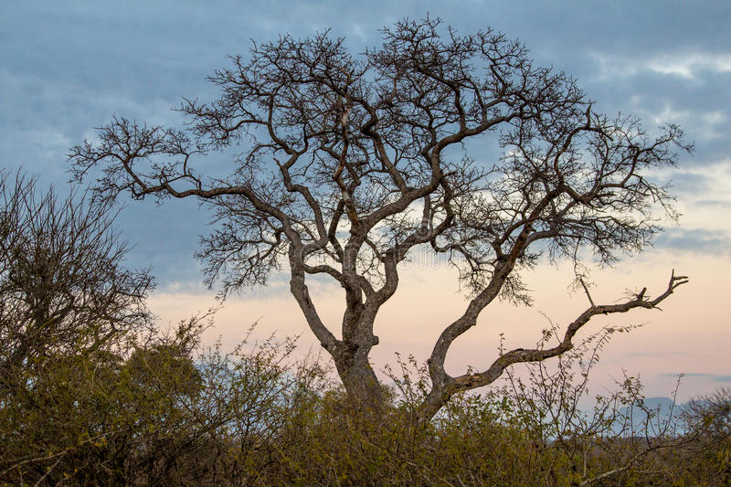 Table Mountain National Park Tree stock photography