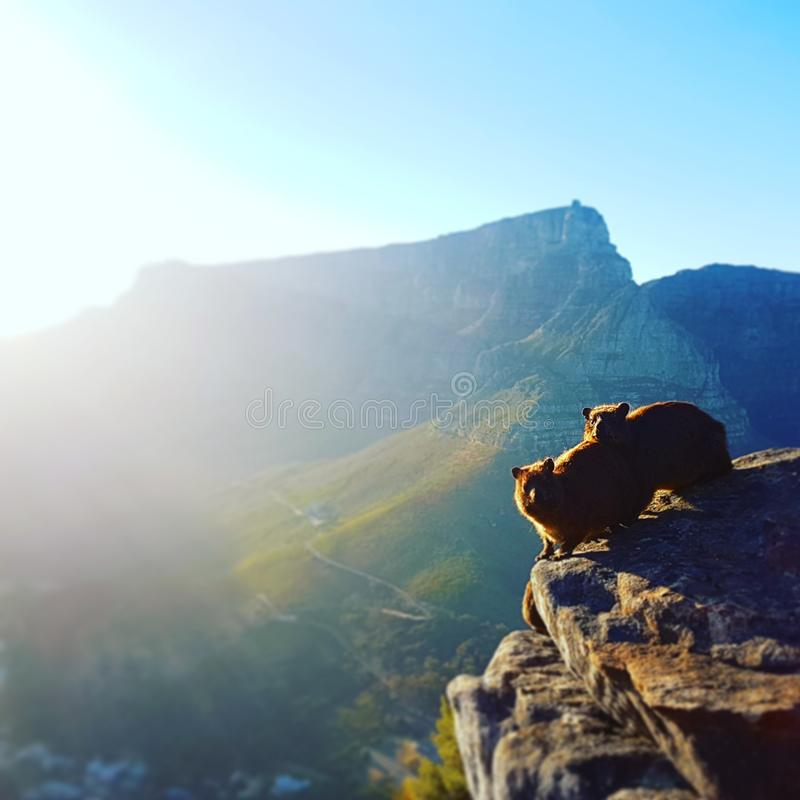 Table Mountain at Sunrise royalty free stock image