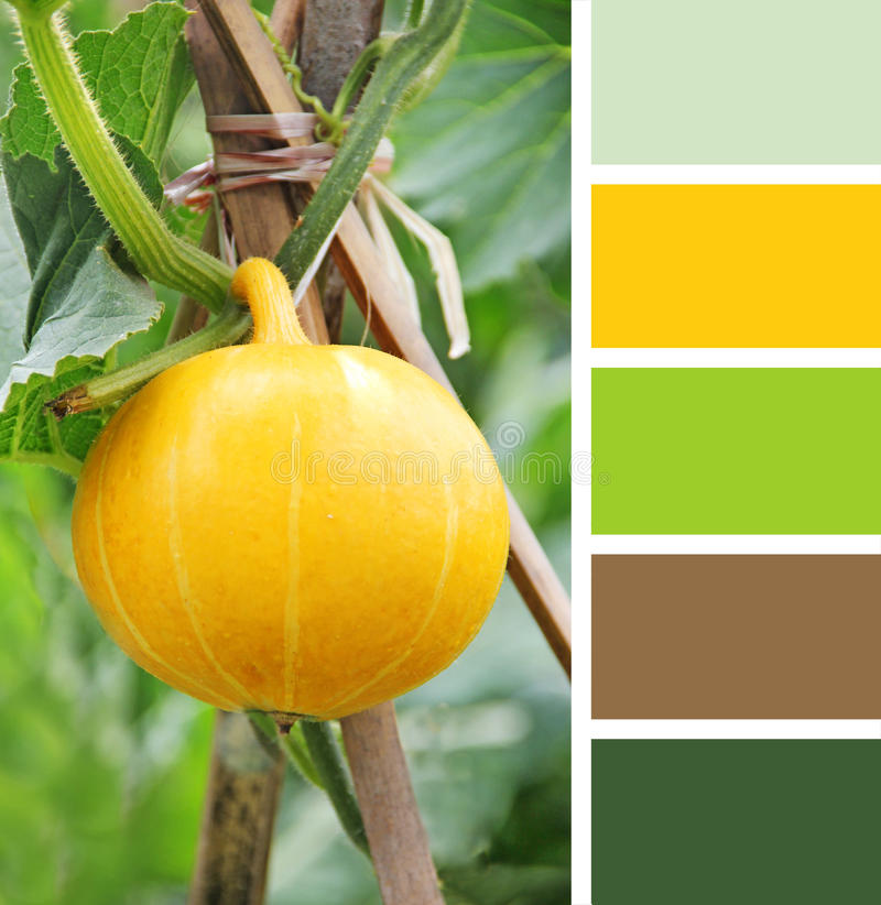 Table setting in cafe. colour palette swatches. pastel hues. Hanging beautiful large pumpkin on the field. color palette swatches stock photo