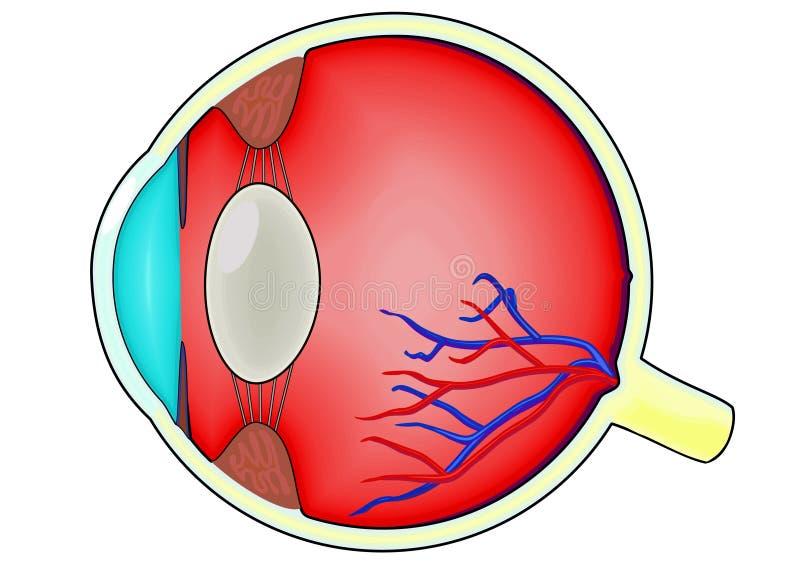 Tableau d'oeil humain illustration libre de droits
