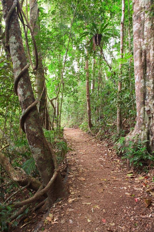 Tablelands Austrália da fuga da floresta tropical fotografia de stock royalty free