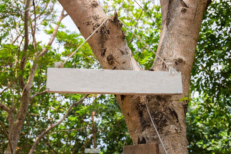 Tablero de madera en blanco en árbol verde Maqueta de la muestra del parque del verano Muestra vacía en el tablero de madera en j fotos de archivo libres de regalías