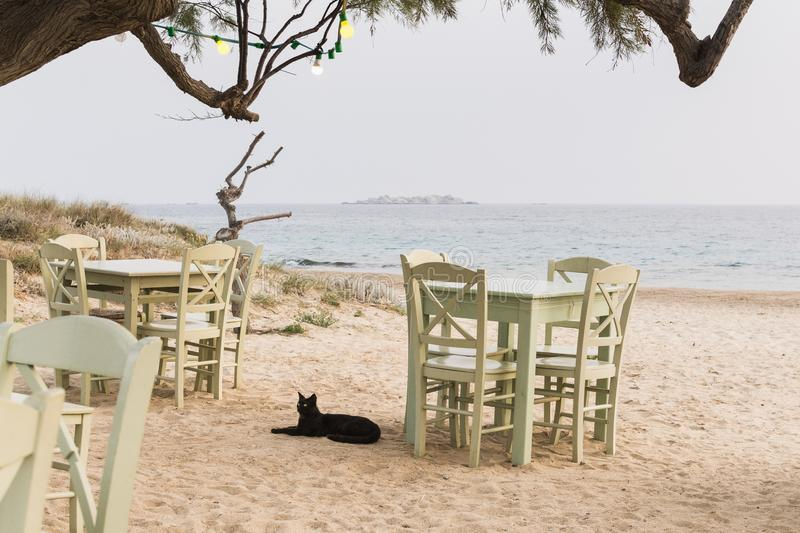 Tables and chairs of seaside restaurant standing on the beach in Milos, Greece. Black cat lying in the shade royalty free stock photography