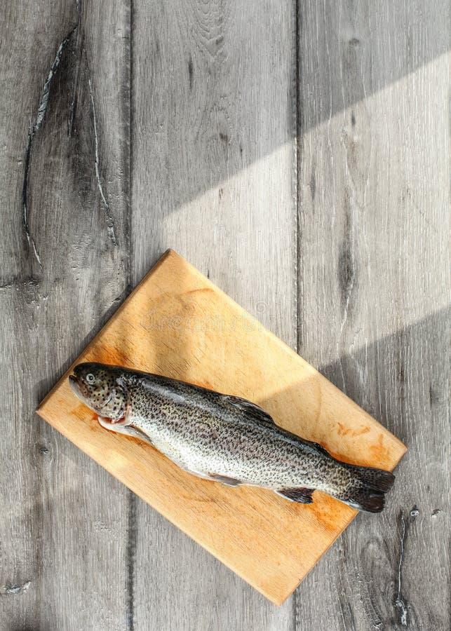 Tabletop sikt, rå forellfisk på skärbrädan, morgonsolshi fotografering för bildbyråer